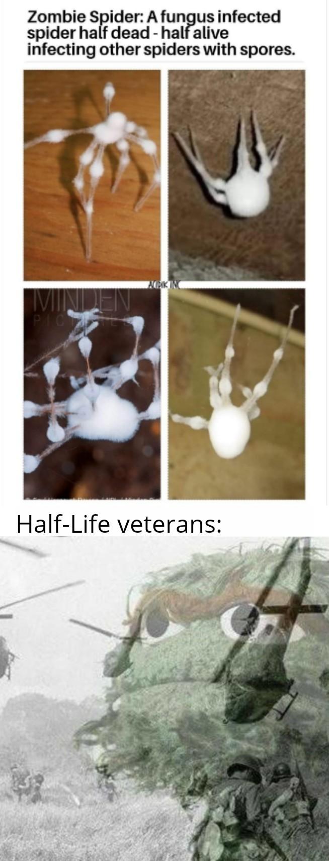 Zombie spiders = Xen Headcrabs - meme