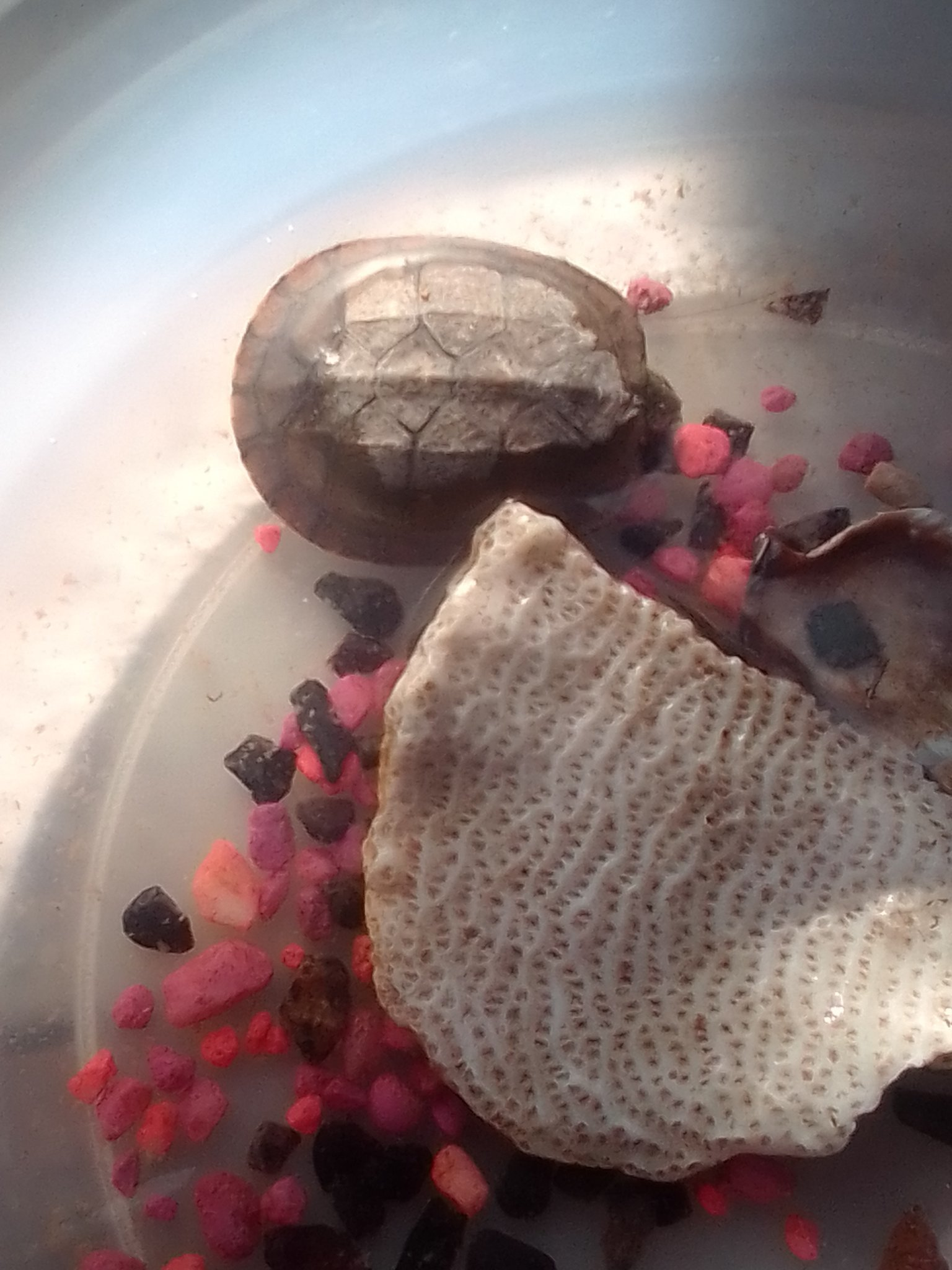 Tortuga reveal se llama Cloe :D - meme