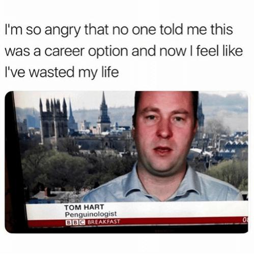 The best career memes :) Memedroid