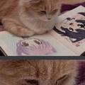 Cat found its god