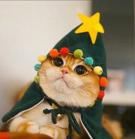 Nicolaus o gato que queria ser uma árvore de natal - meme