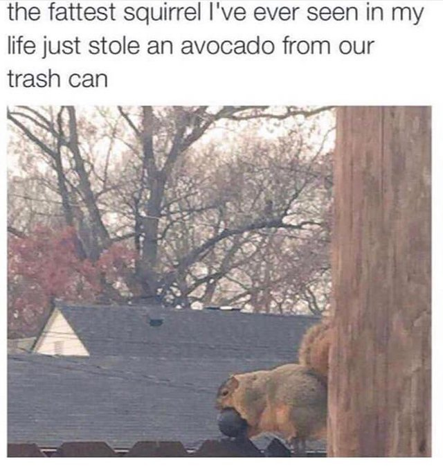 The fattest squirrel I've ever seen in my life - meme