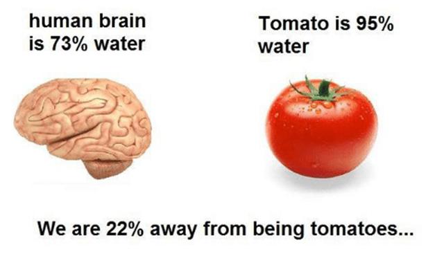Human brain vs tomato - meme