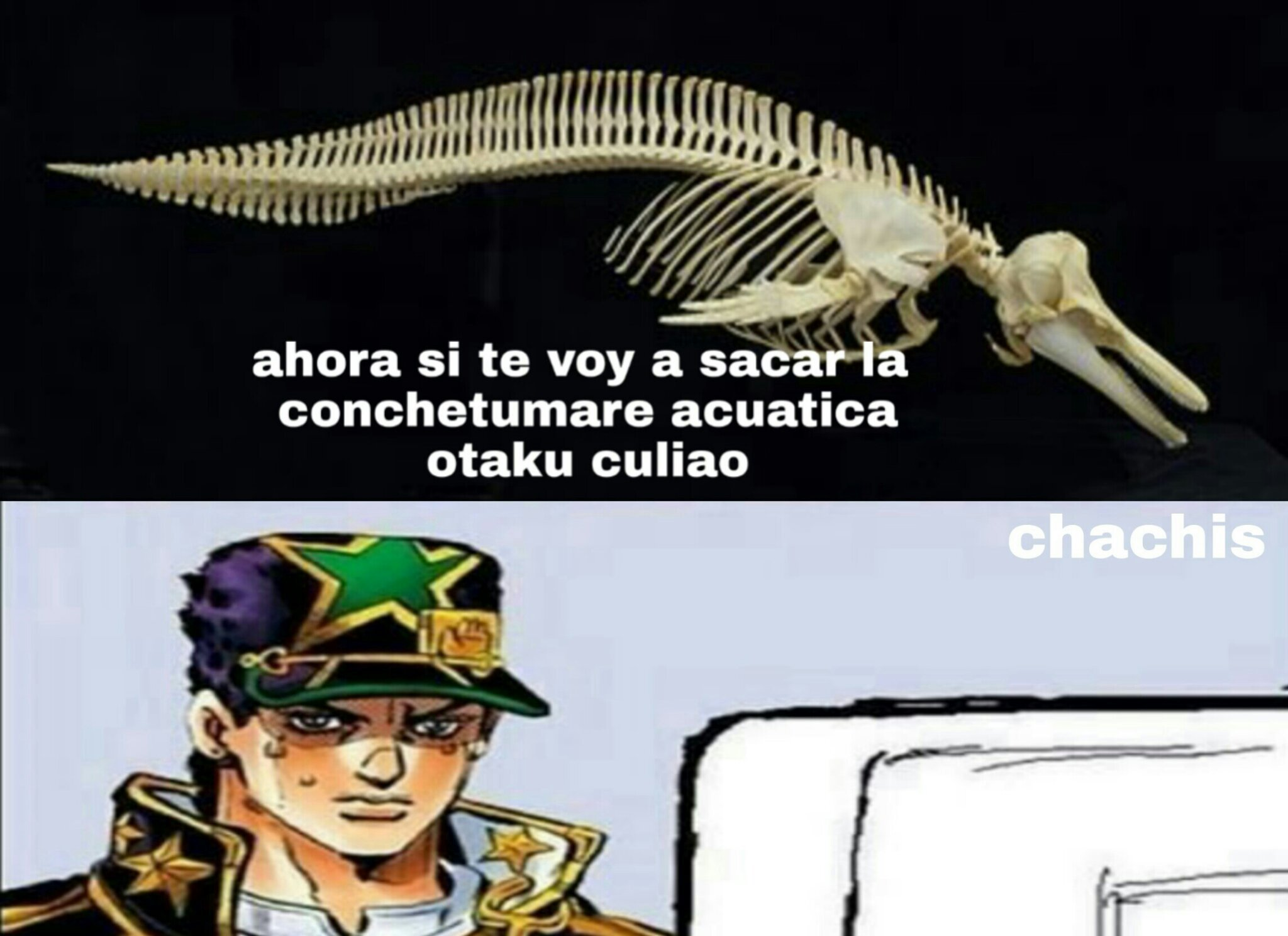 Delfin anti otakus - meme
