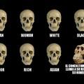 M E M E S 2