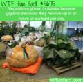 WTF Fun Fact *Confirmed*