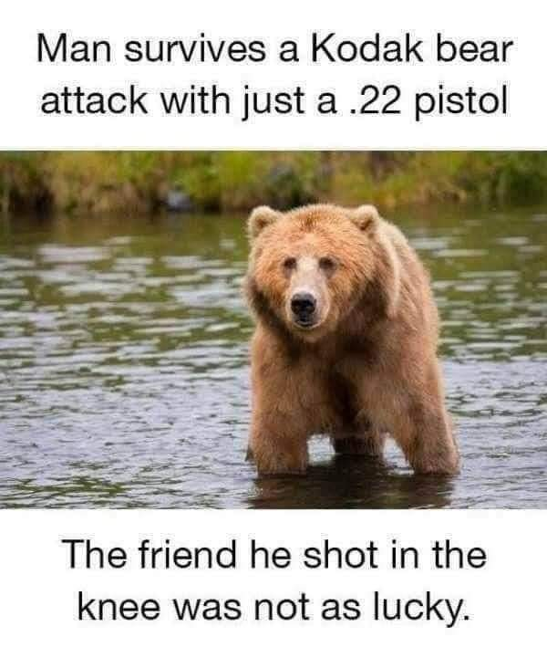 You don't have to outrun the bear - meme