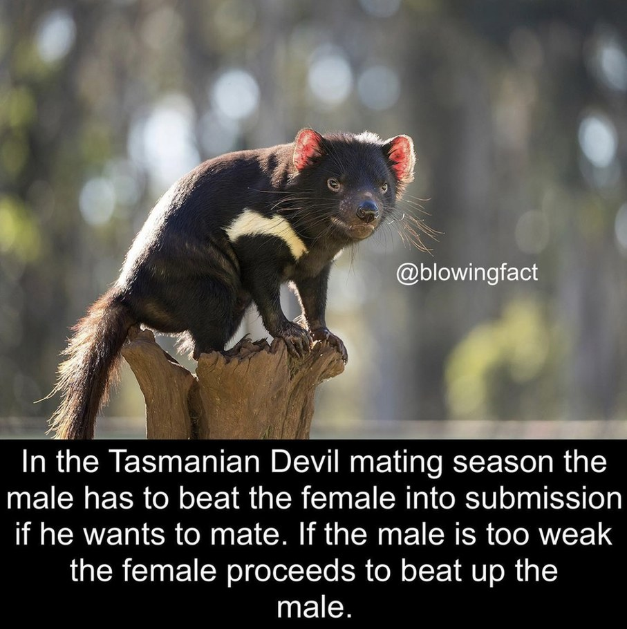 Devil - meme