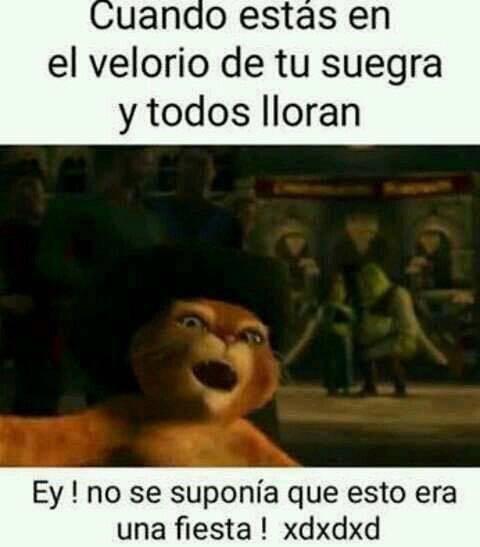 EL TÍTULO QUERÍA FIESTA - meme