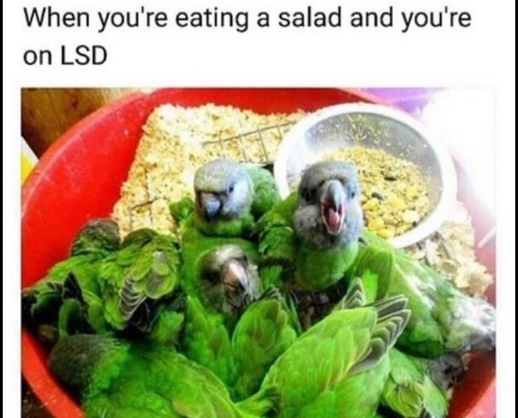 there's a birb in my salad - meme