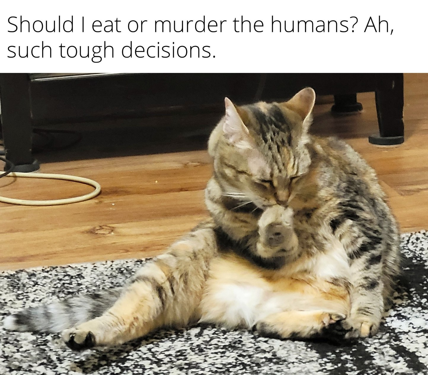 Cat thoughts - meme