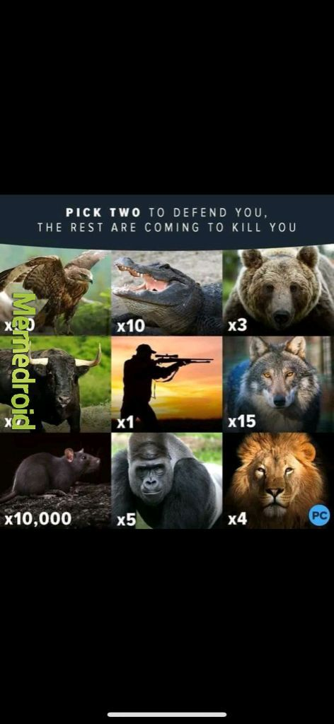 5 silverbacks and three grizzlys? No contest - meme