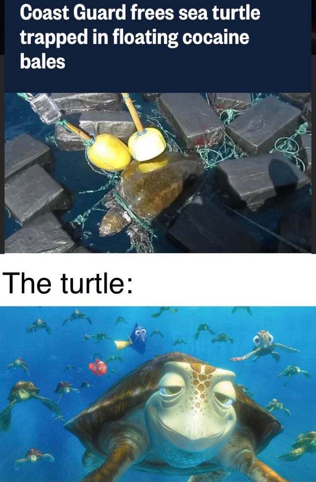 Coast guard frees sea turtle trapped in floating cocaine bales - meme