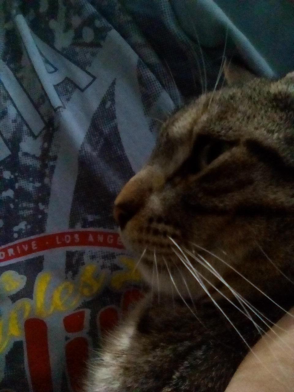 Gato reveal - meme