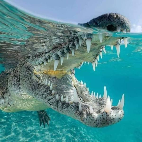Colgator toothpaste for that great smile and fresh breath. - meme