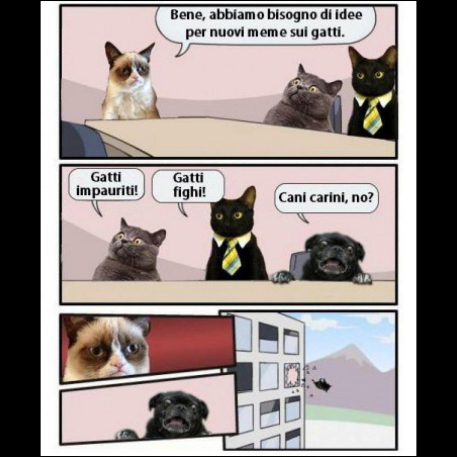 Cats!!!! - meme