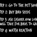 Bird seeds