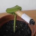 Smoke plants
