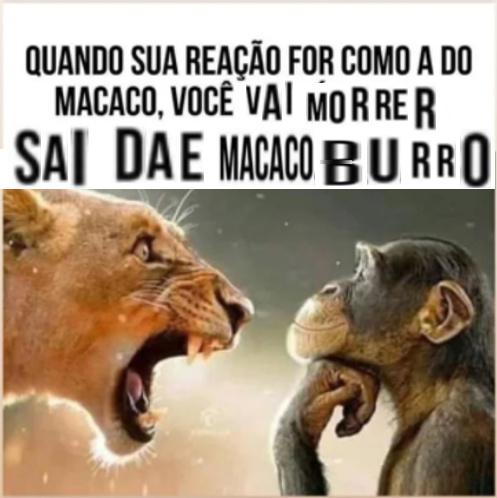 Mamaco - meme