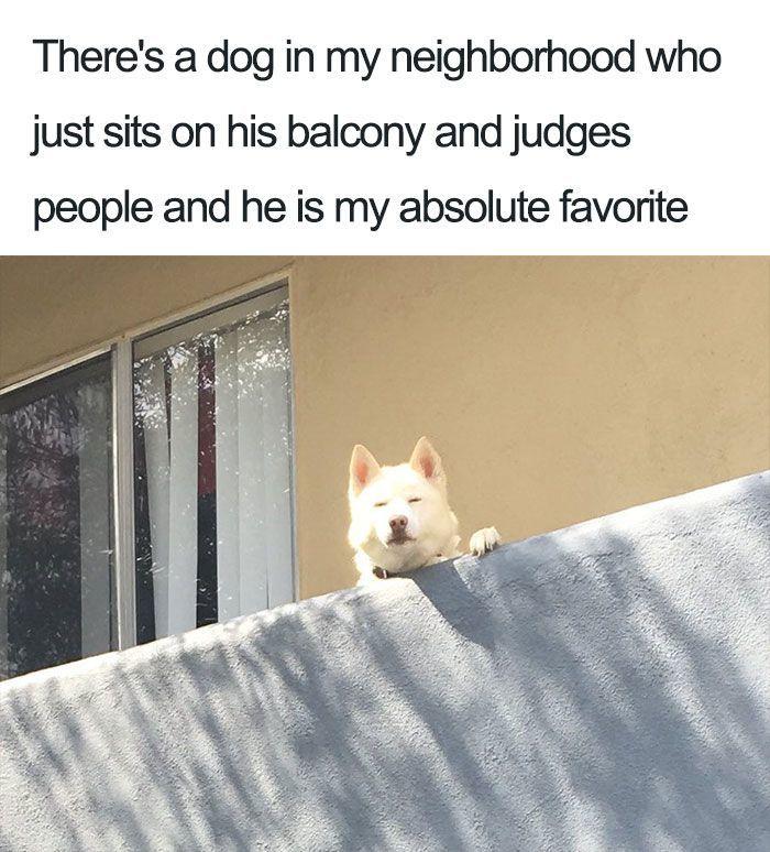 More Dog Memes