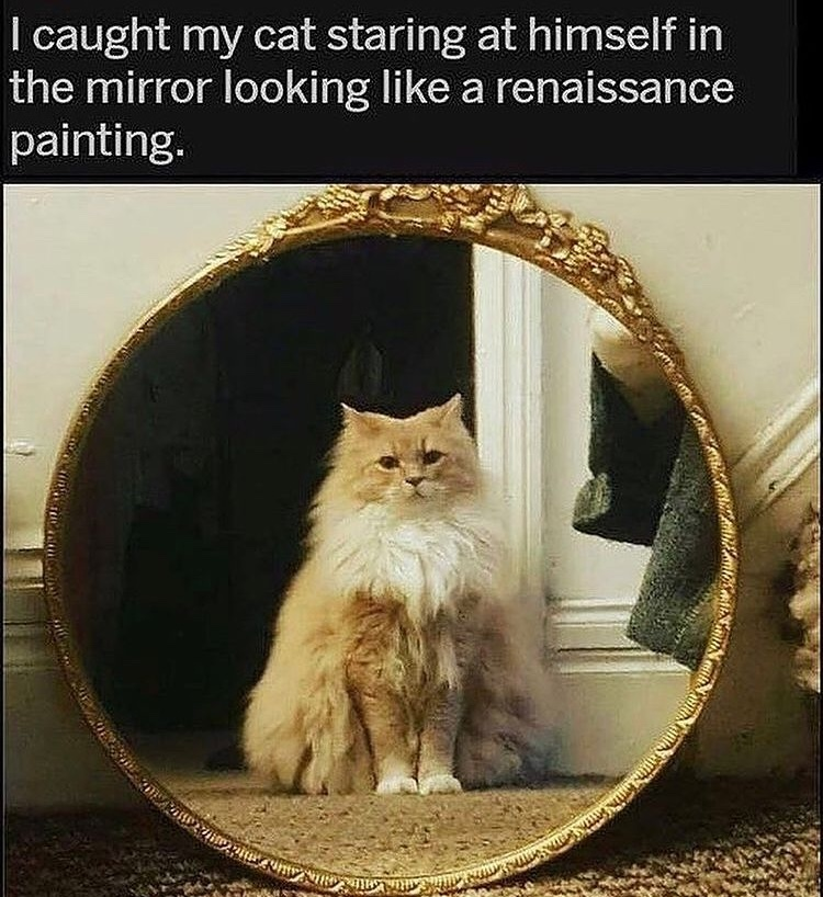 cat painting - meme