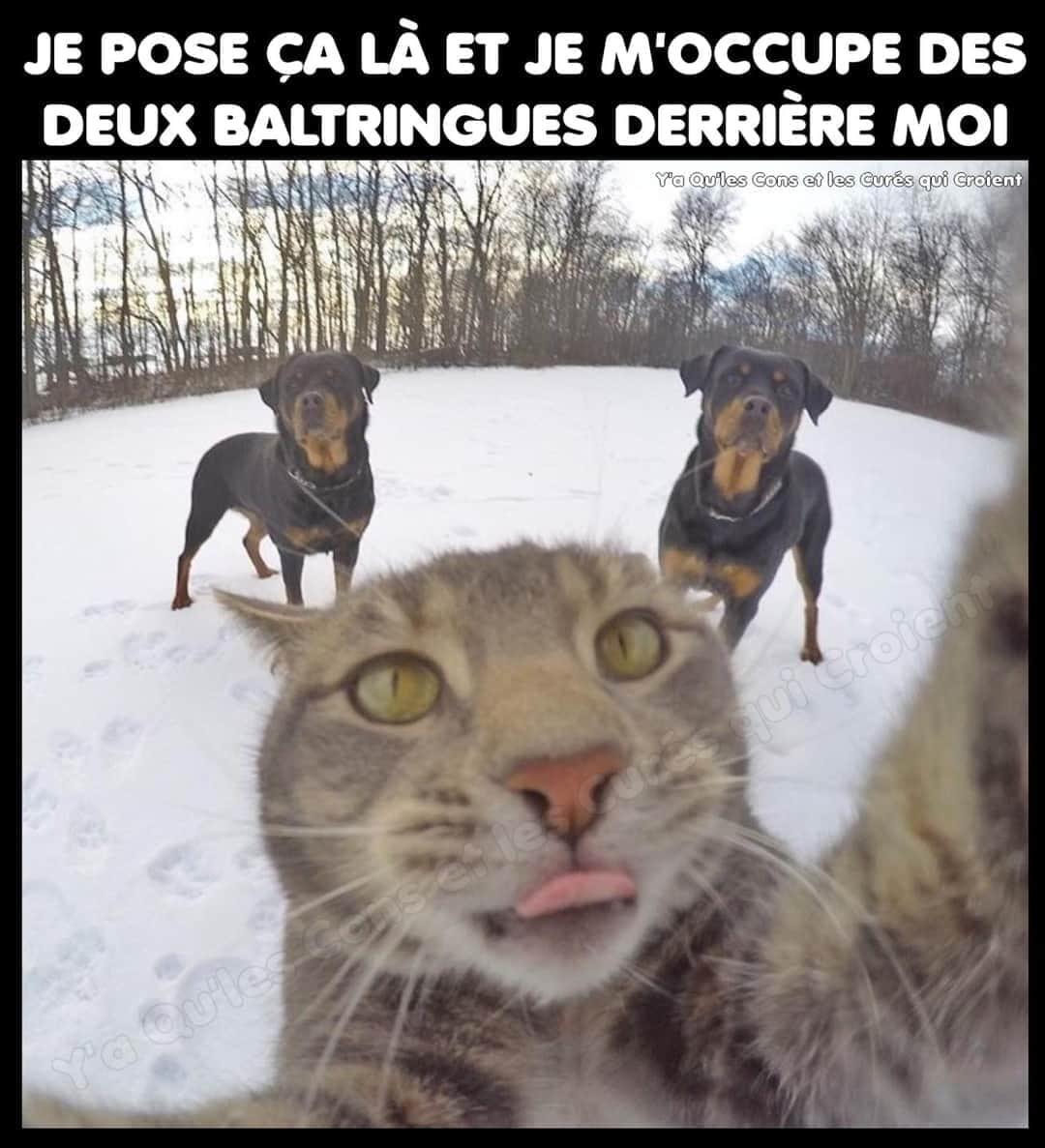 Le Chat de Vladimir poutine - meme