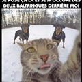 Le Chat de Vladimir poutine