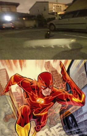Flash-Cat - meme