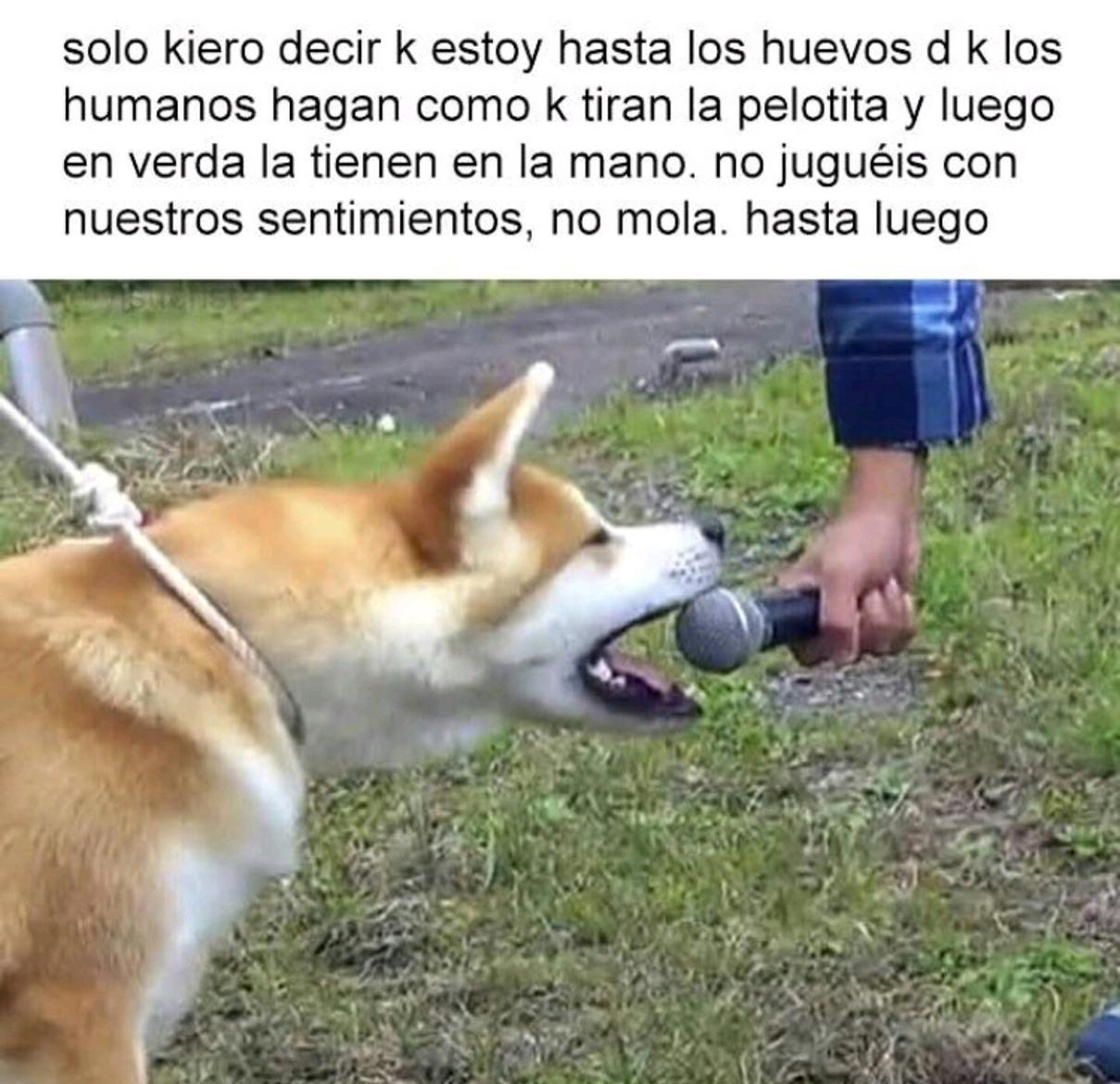 La rebelión de los perros - meme