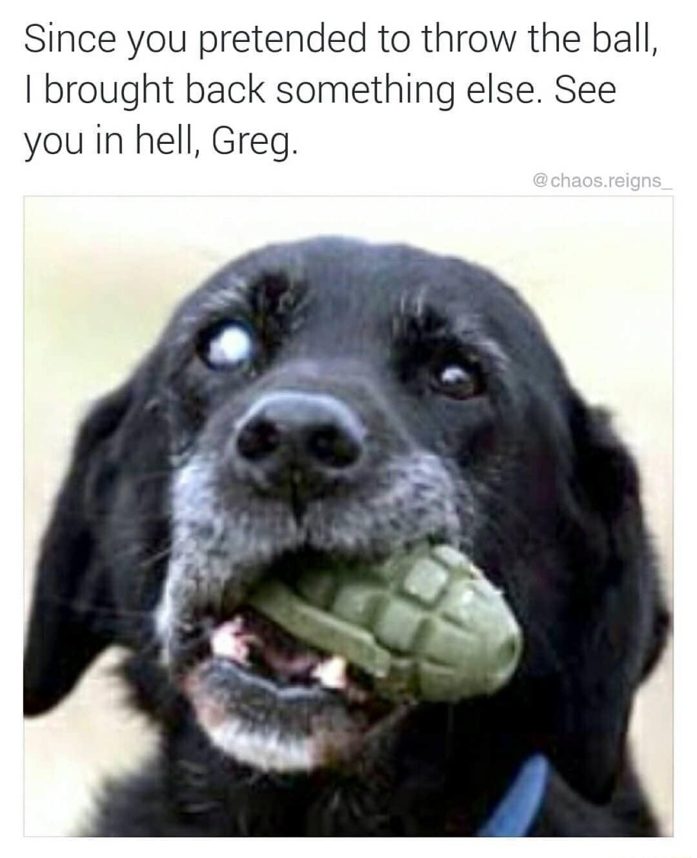 Doggo bringeth bombu - meme