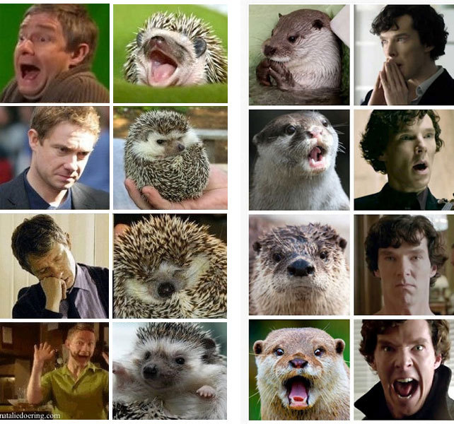 Martin Freeman and Benedict Cumberbatch - meme