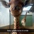 Baby giraffe loves to smils   gagbee.com