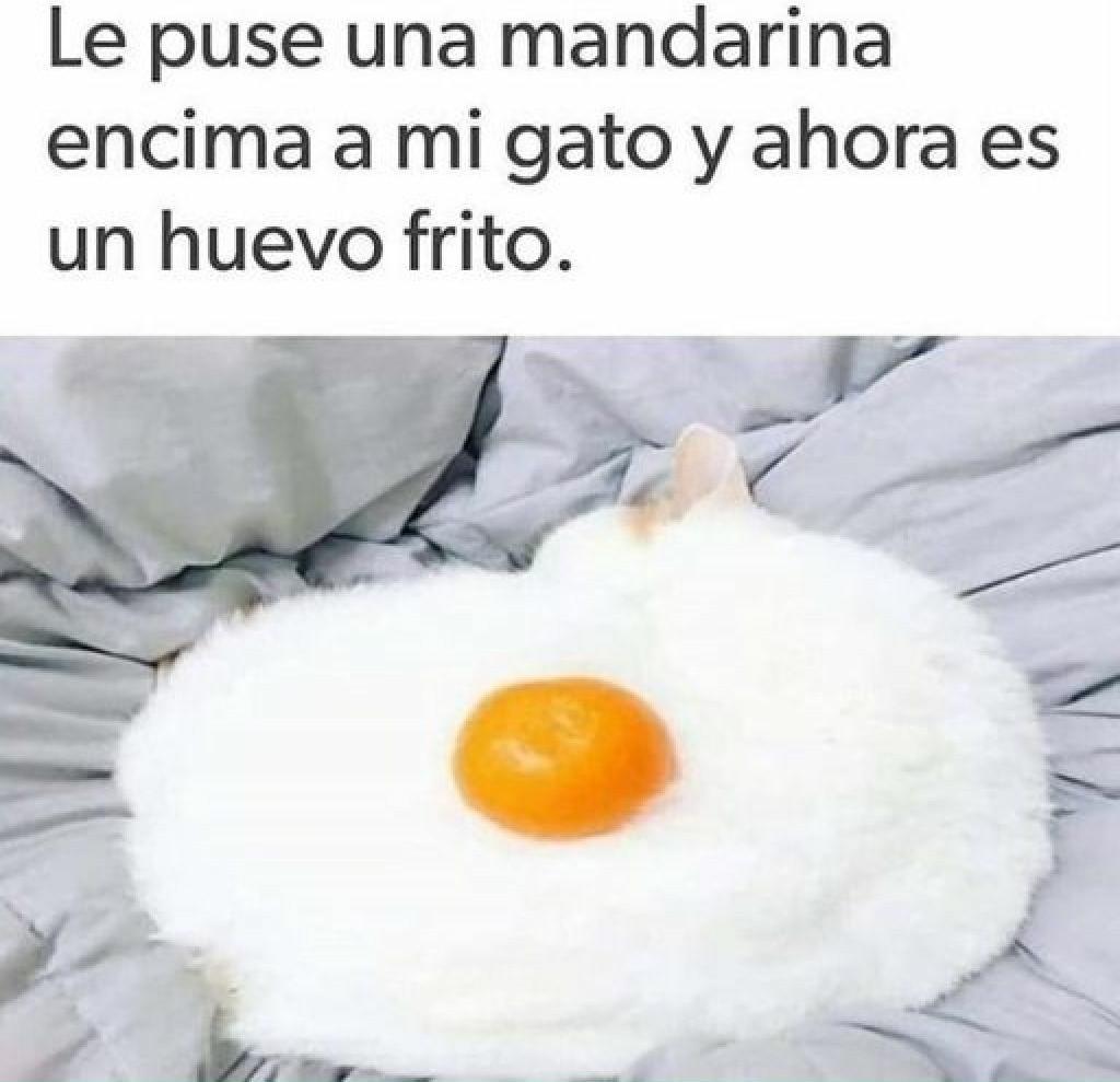Huevo gato - meme
