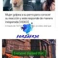 Pobre perro :(