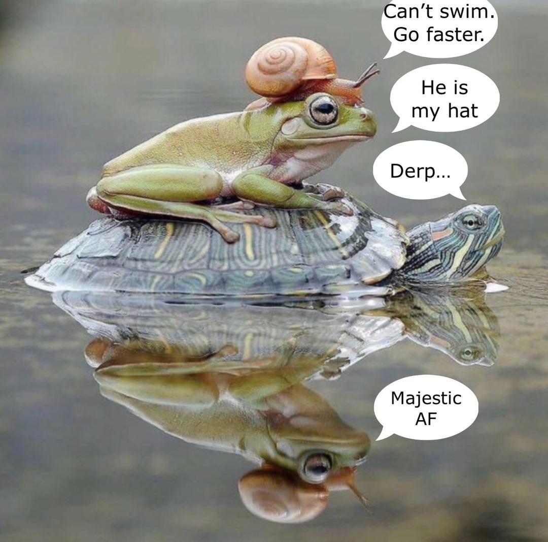 froggie went courtin n he did ride - meme