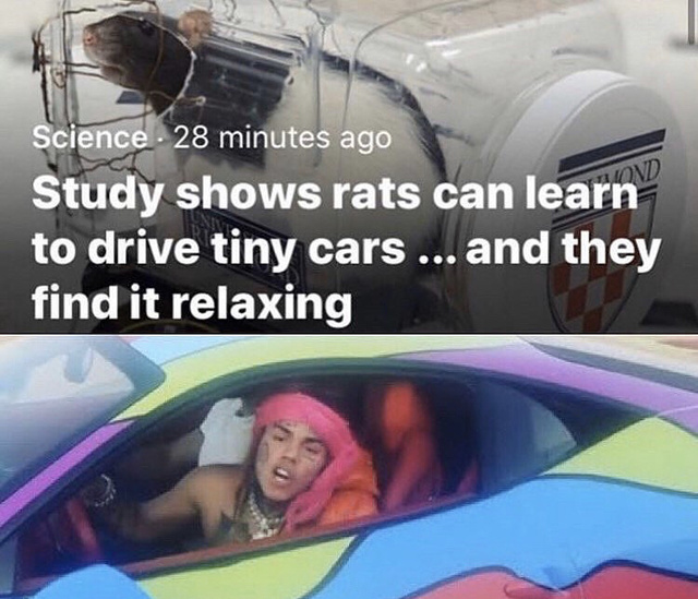 Study shows rats can learn to drive tiny cars - meme