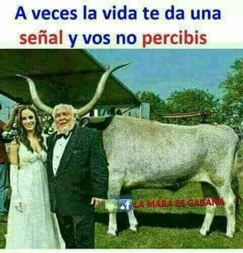 Toro - meme