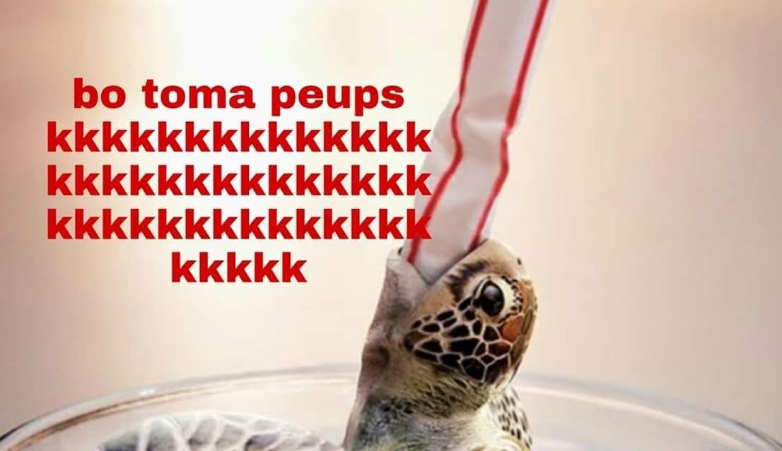 mata tartaruga - meme