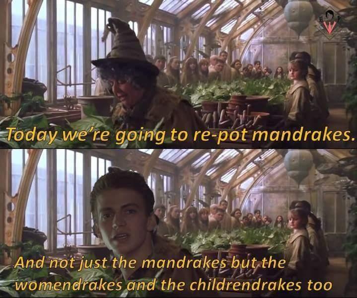 Woo herbology - meme