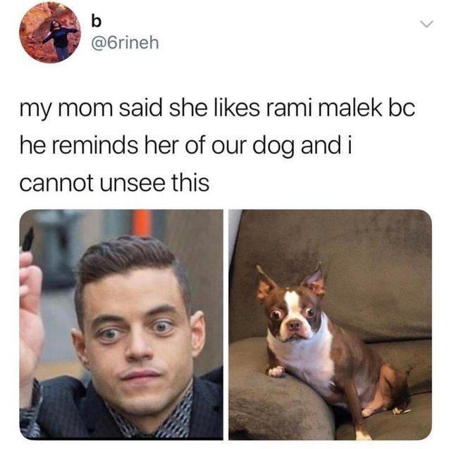 Rami Malek looks like my mom's dog - meme