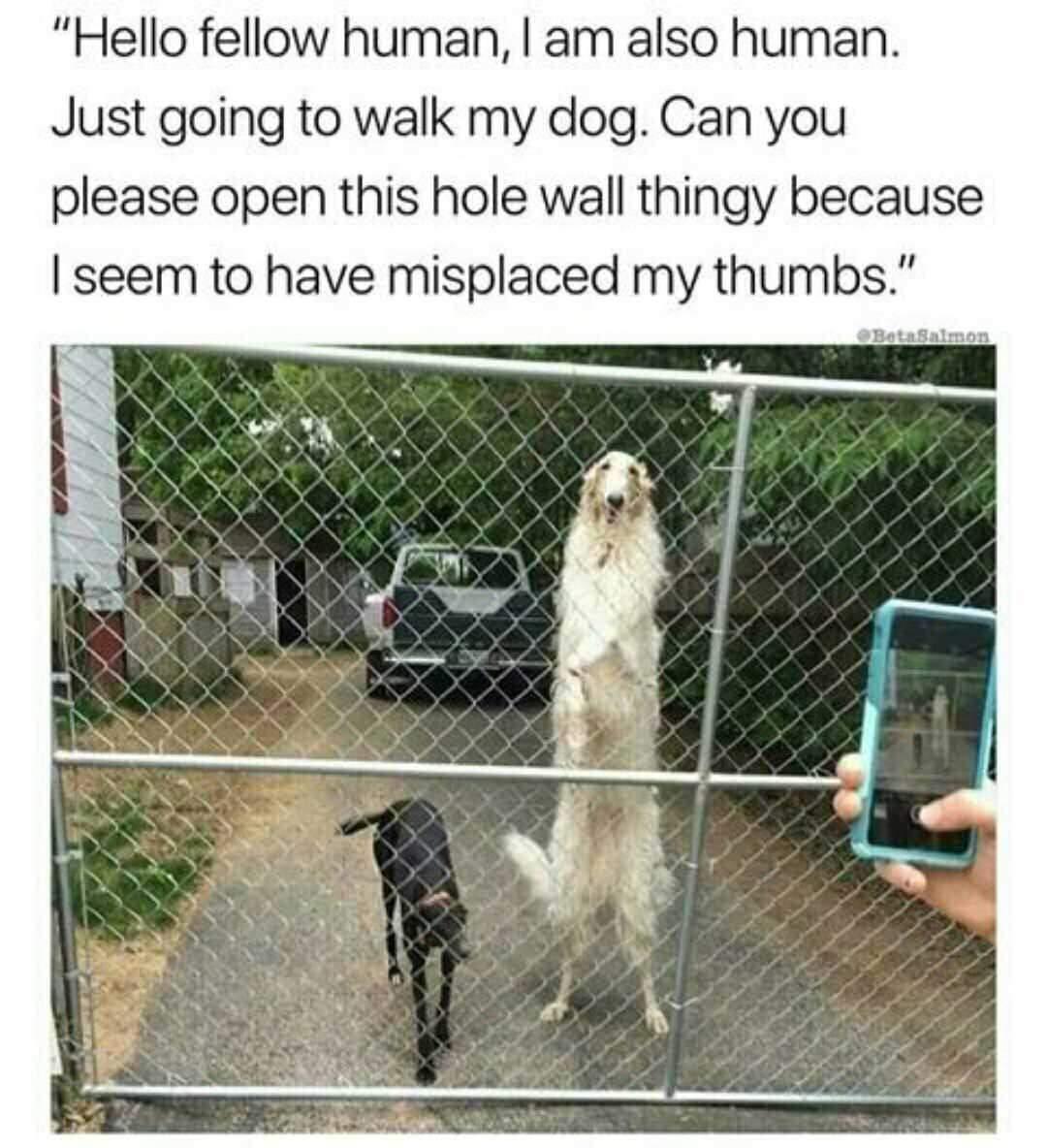 Tall dog - meme