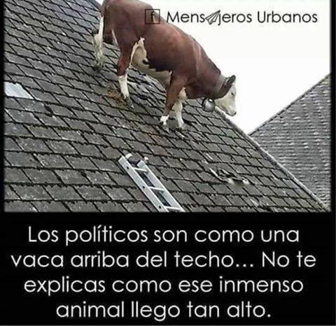 políticos - meme