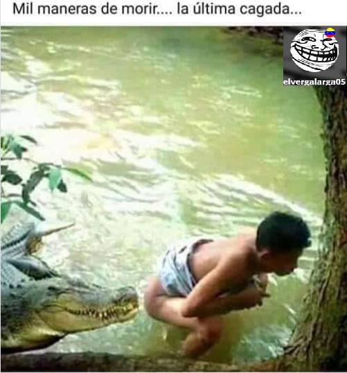 ese cocodrilo.. pareciera que se lo esta oliendo :v - meme
