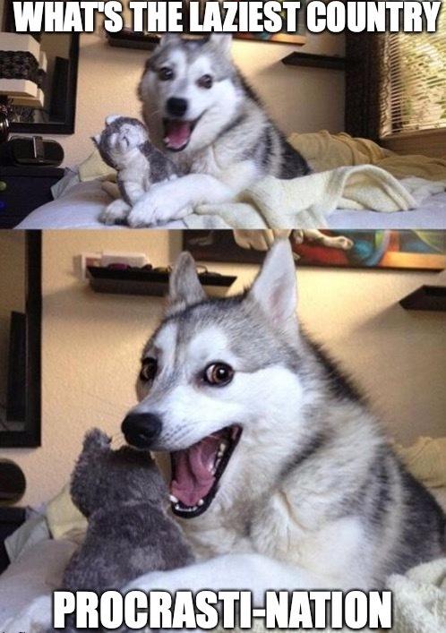Not so bad, bad pun dog - meme