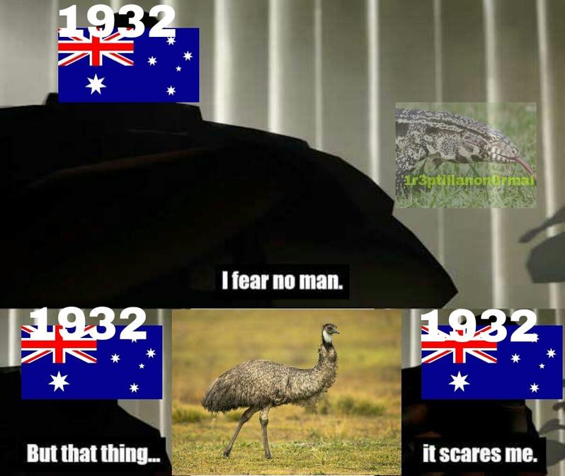 La gran guerra emu - meme