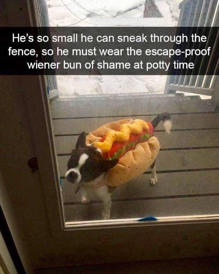 hot dog dog - meme