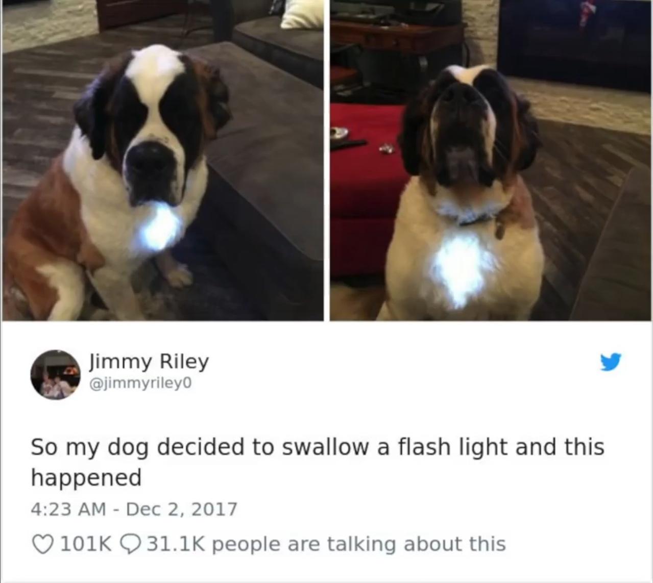 iron dog - meme