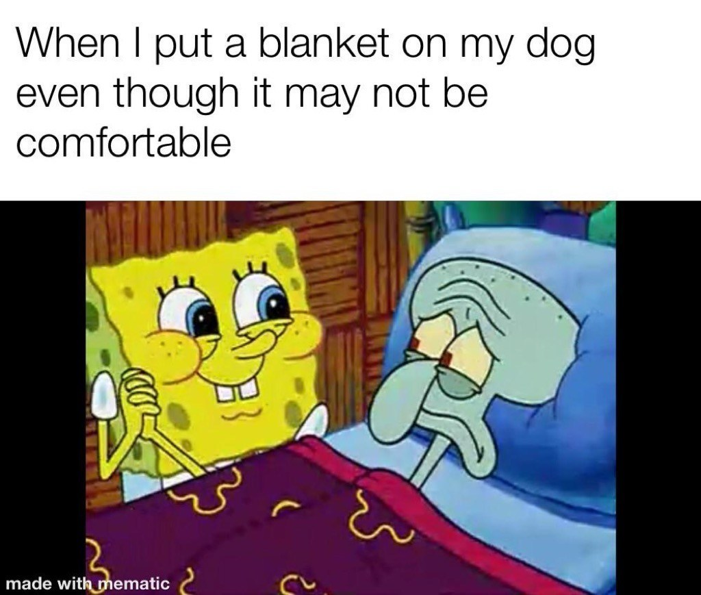 How my dog is in a blanket - meme