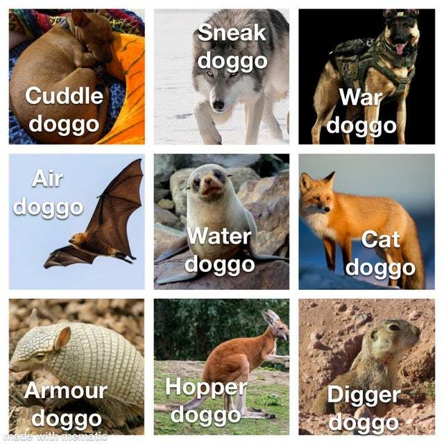 What is your favorite doggo? - meme