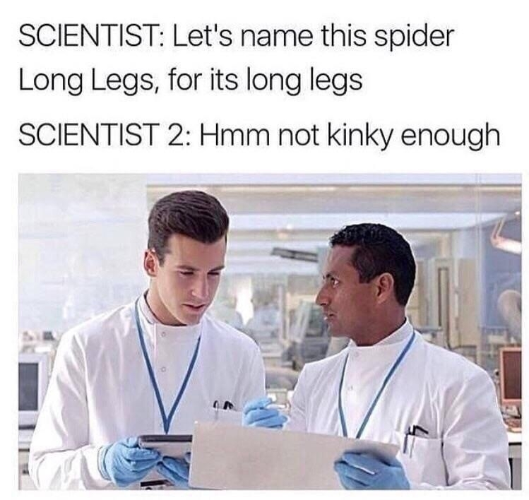 Daddy long legs - meme